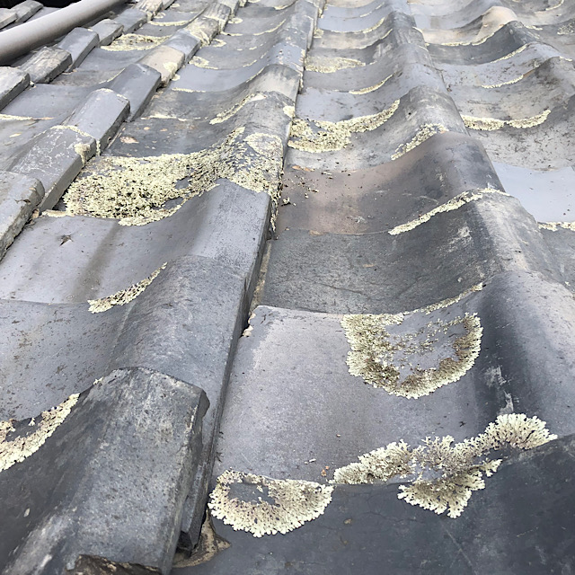 瓦が劣化し藻が生えている写真