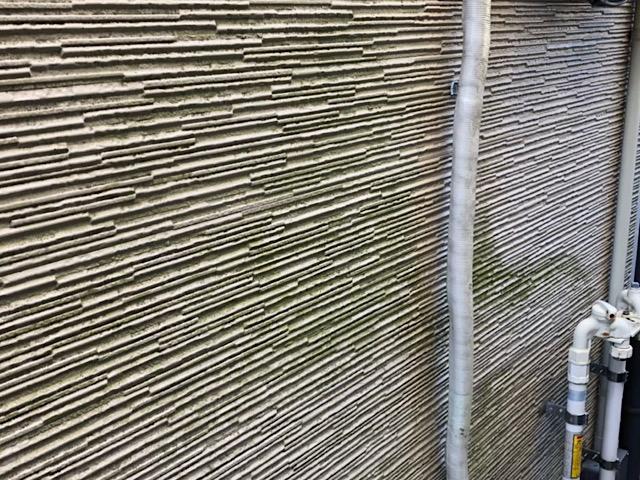 サイディング壁の藻