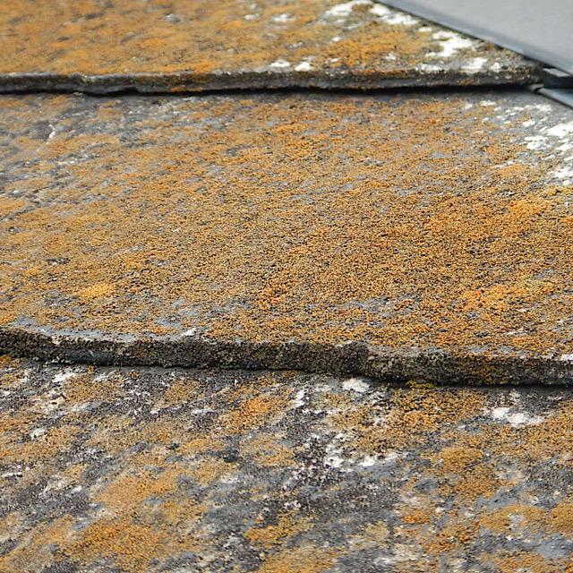 カラーベストの屋根が劣化して藻が生えている様子
