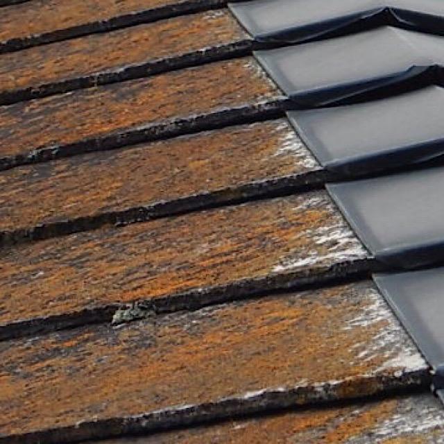 カラーベストの屋根から藻が生えている