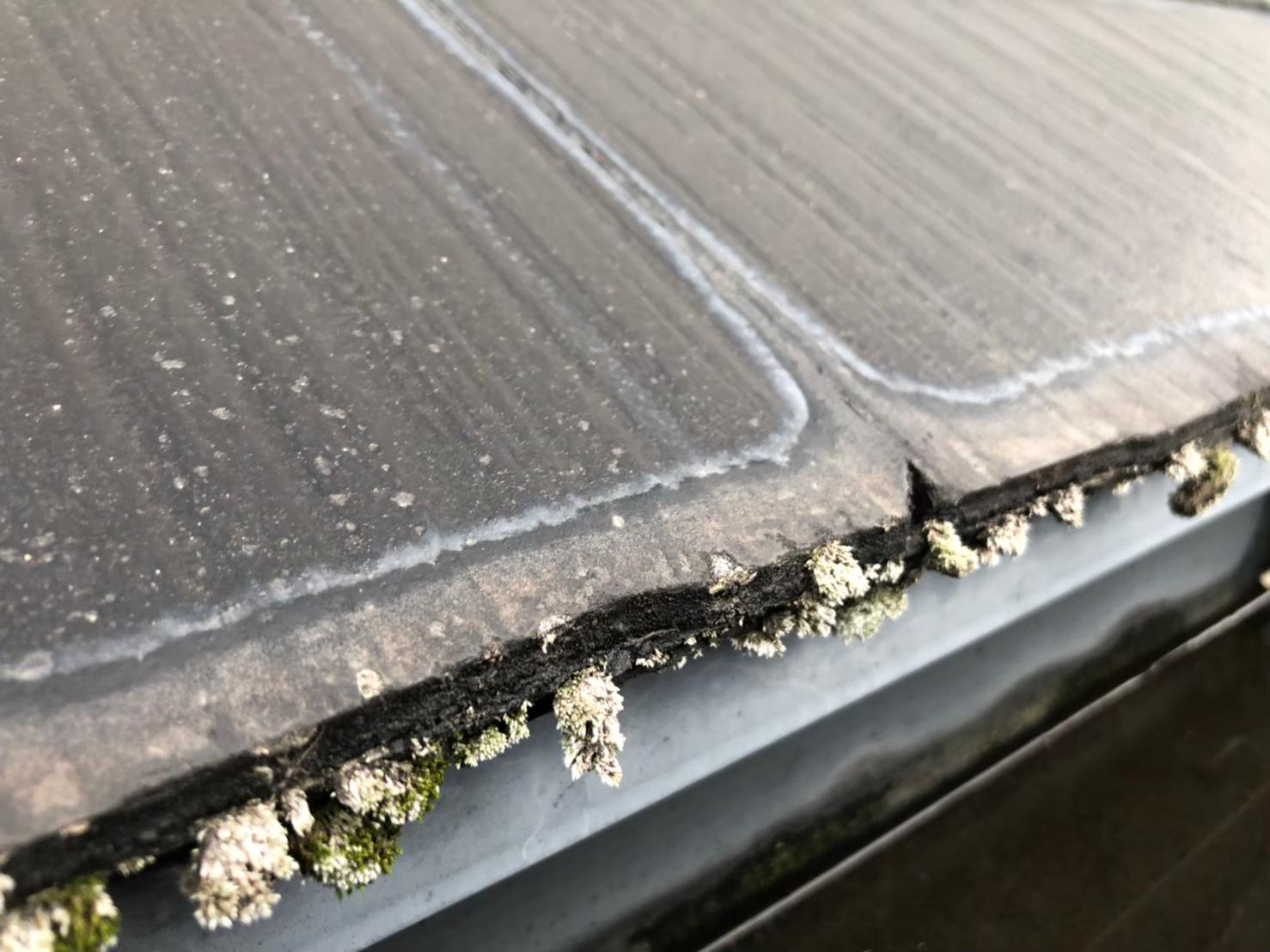 カラーベストの屋根に藻