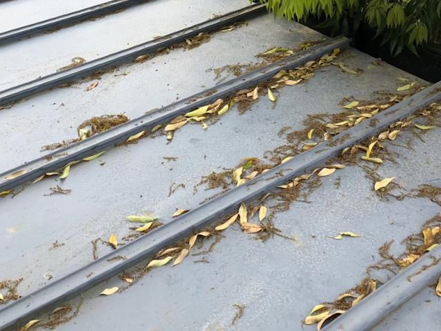 屋根に落ち葉
