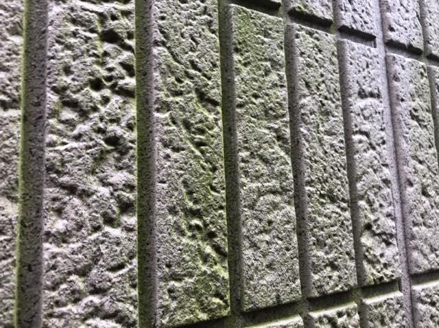 カビが生えた壁