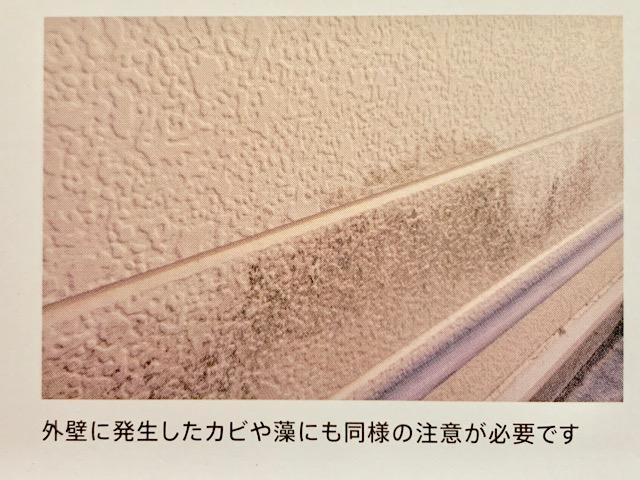 外壁に発生したカビや藻