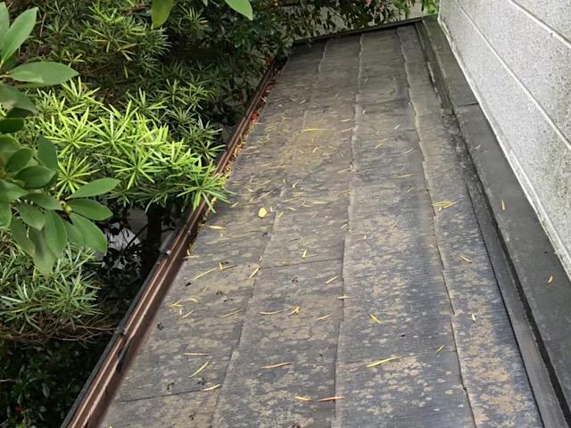 スレート屋根に藻