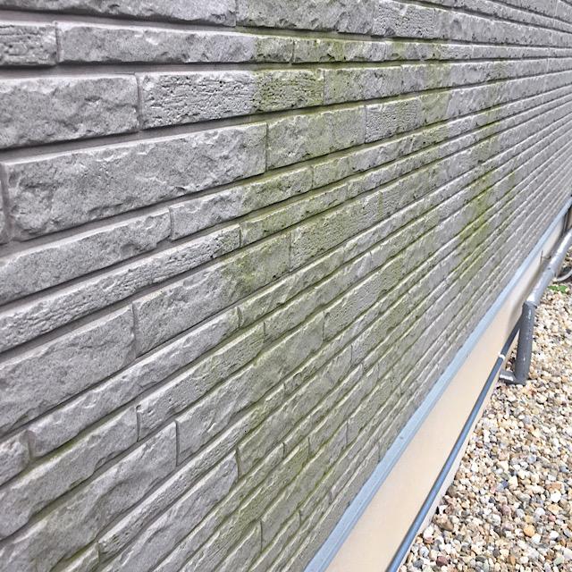 外壁サイディングからカビ
