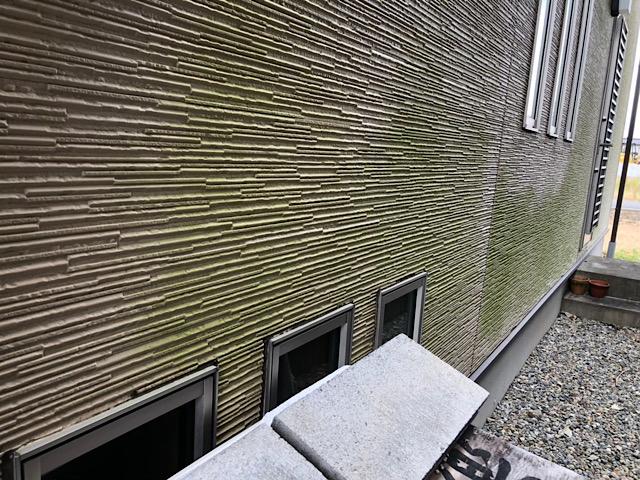 壁全体に藻