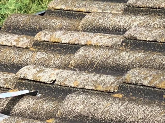 屋根のコケ
