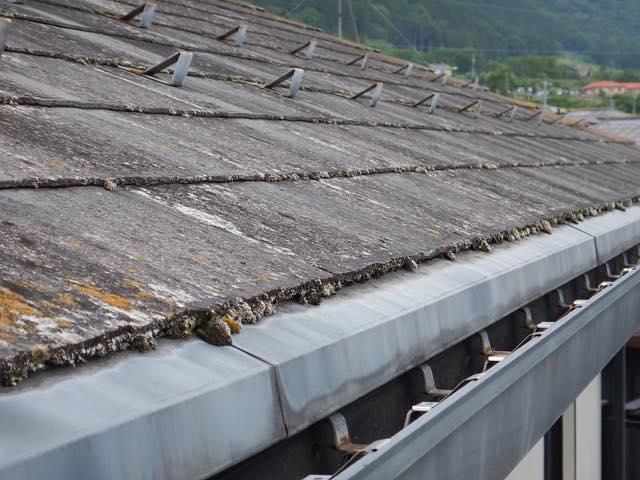 藻が生えた屋根