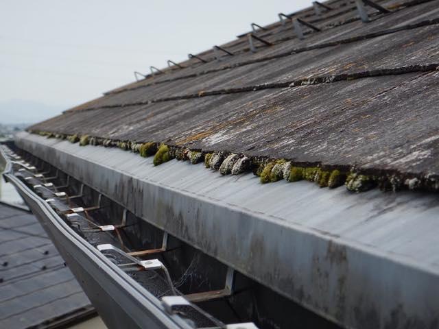 コケが生えた屋根
