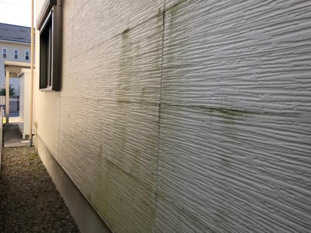 緑色になった外壁