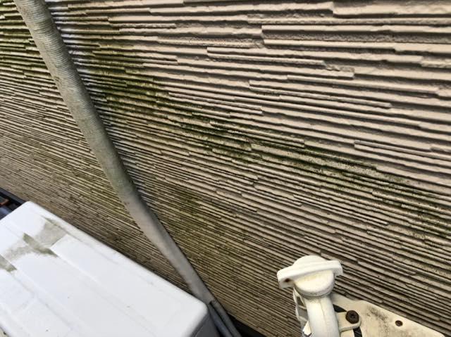 藻が外壁に発生